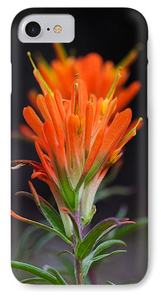 Prairie Paintbrush Flower IPhone Case