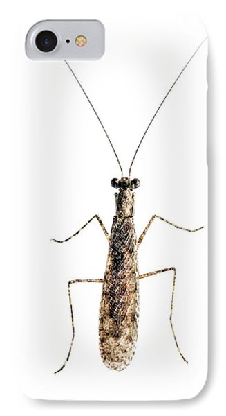 Praying Mantis IPhone Case by Alex Hyde