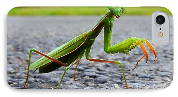Praying Mantis IPhone Case by Carolyn Cable