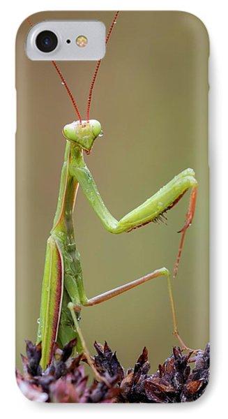 Praying Mantis IPhone Case by Heath Mcdonald