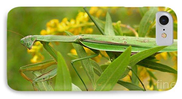 Praying Mantis In September IPhone Case by Anna Lisa Yoder