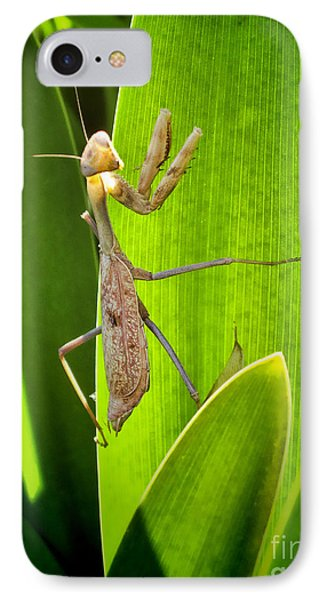 IPhone Case featuring the photograph Praying Mantis by Kasia Bitner