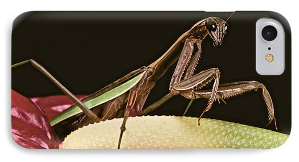 Praying Mantis Taking A Walk On The Anthurium Flower With A White Mat Finish Phone Case by Leslie Crotty