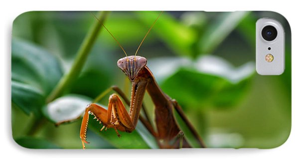 IPhone Case featuring the photograph Praying Mantis by Thomas Woolworth
