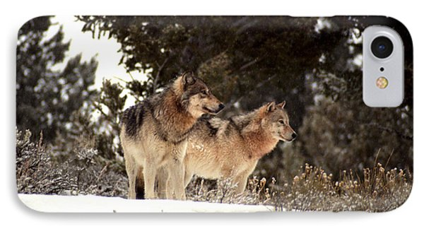 IPhone Case featuring the photograph Predators by Sharon Elliott