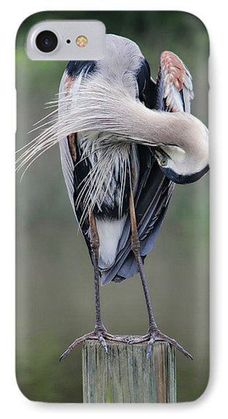 Preening Heron IPhone Case