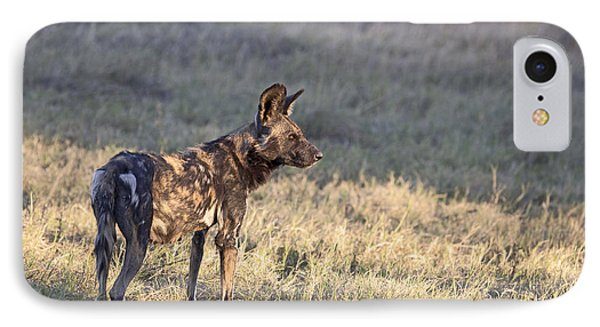IPhone Case featuring the photograph Pregnant African Wild Dog by Liz Leyden