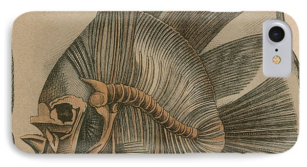 Prehistoric Fish Platax Altissimus Phone Case by Science Source
