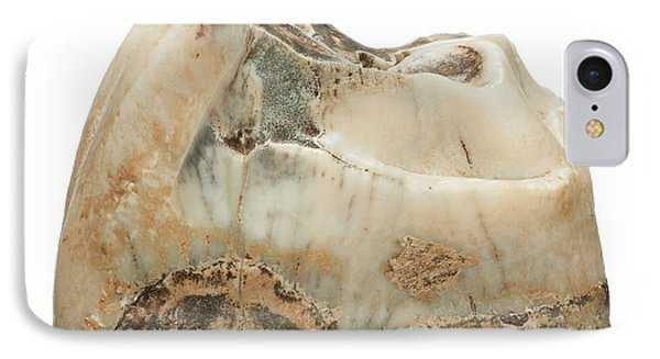 Prehistoric Rhinoceros Tooth Fossil IPhone Case by Natural History Museum, London