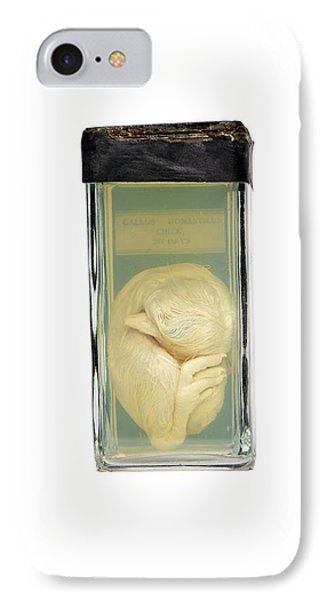 Preserved Chick IPhone Case by Gregory Davies
