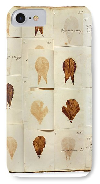 Pressed Tulip Specimens IPhone Case by Natural History Museum, London
