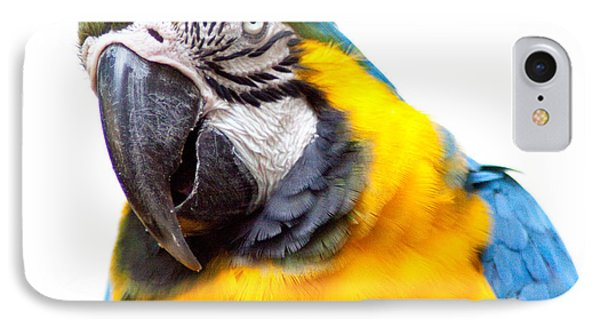 IPhone Case featuring the photograph Pretty Bird by Roselynne Broussard