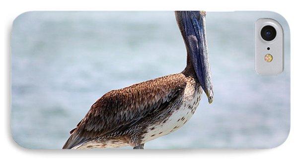 Pretty Gulf Pelican IPhone Case by Carol Groenen