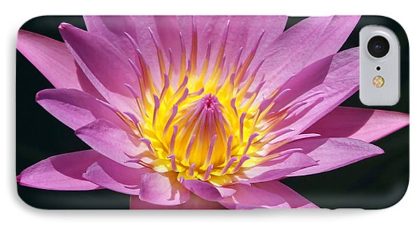 Pretty In Pink And Yellow Water Lily Phone Case by Sabrina L Ryan