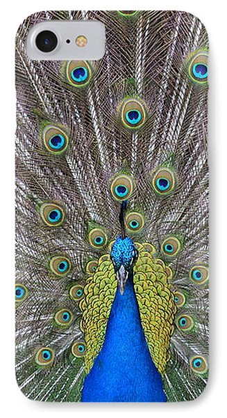 Pretty Peacock IPhone Case by P S