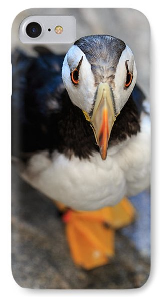 IPhone Case featuring the photograph Pretty Puffin by Jennifer Casey
