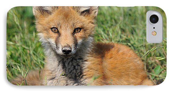 Pretty Red Fox Kit Phone Case by Angel Cher