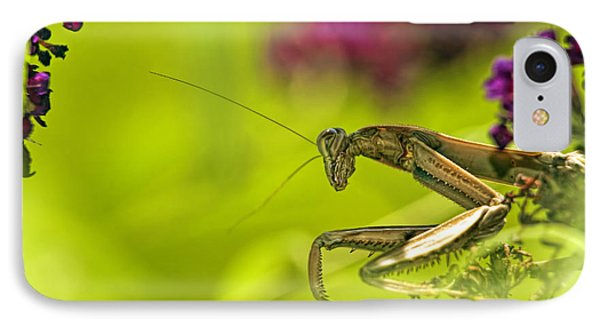 Preying Mantis IPhone Case by Geraldine Scull
