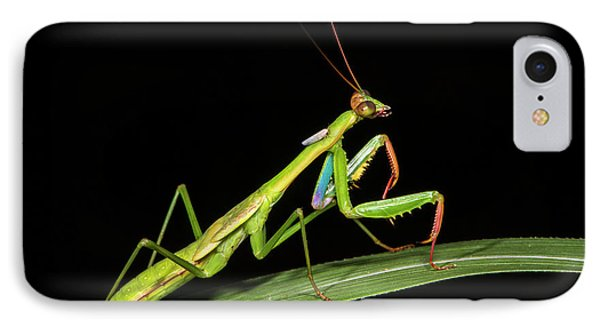 Preying Mantis, Odzala, Kokoua National IPhone Case by Pete Oxford