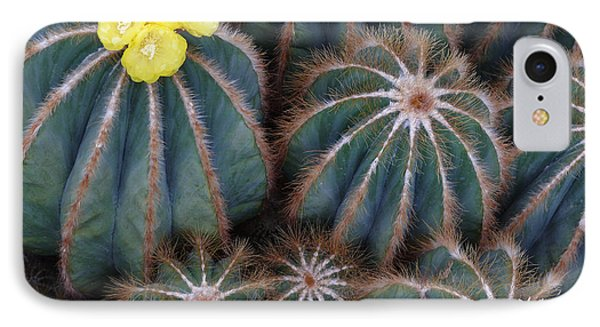 IPhone Case featuring the photograph Prickly Beauties by Evelyn Tambour