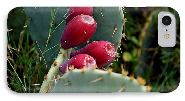 Prickly Pear Cactus IPhone Case by M E Wood