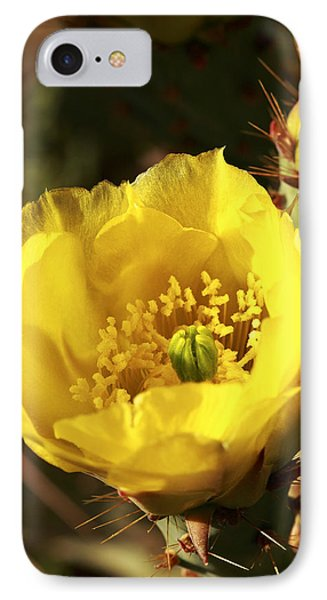 IPhone Case featuring the photograph Prickly Pear Flower by Alan Vance Ley