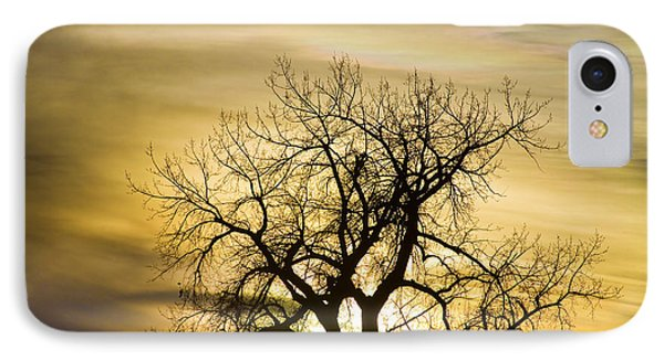 Prism Sunset Light Tree Magic Hour IPhone Case by James BO  Insogna