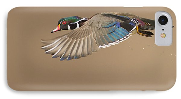 Probably The Most Beautiful Of All Duck Species Phone Case by Mircea Costina Photography