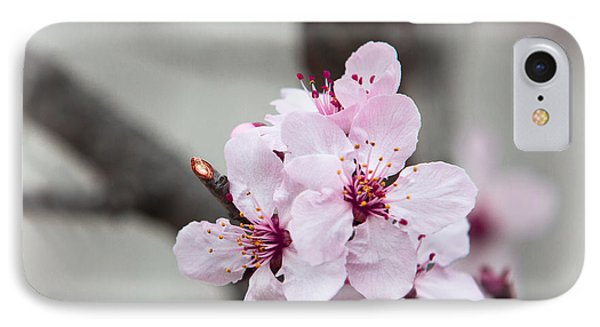 Promise Of Spring IPhone Case by Annette Hugen