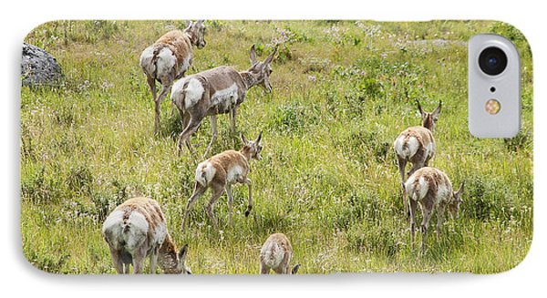 IPhone Case featuring the photograph Pronghorn Antelope In Lamar Valley by Belinda Greb