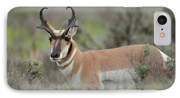 Pronghorn Buck, Antilocapra Americana IPhone Case