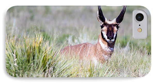 Pronghorn Buck In Prairie Grasses IPhone Case by Martha Marks