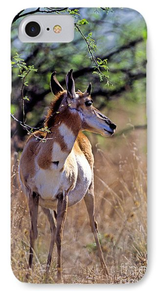 Pronghorn In Spring IPhone Case by Martha Marks