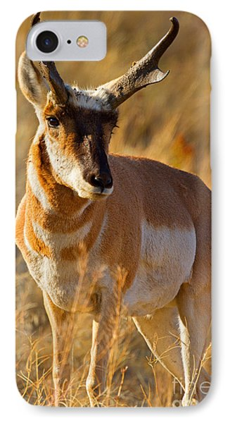 IPhone Case featuring the photograph Pronghorn by Aaron Whittemore