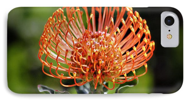 Protea - One Of The Oldest Flowers On Earth Phone Case by Christine Till