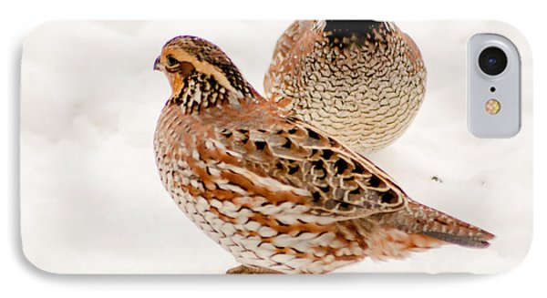 Protective Quail IPhone Case by Dawn Romine