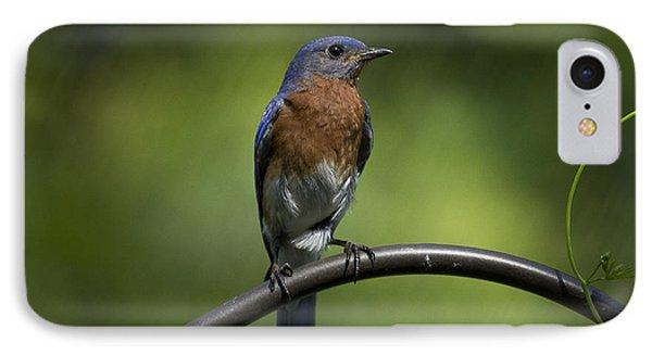 Proud Eastern Bluebird  Phone Case by Cris Hayes