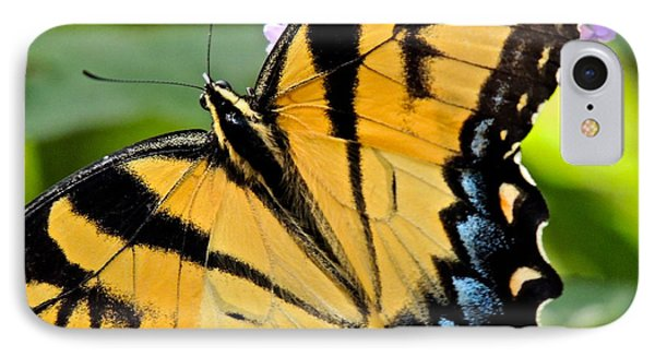 IPhone Case featuring the photograph Proud Swallowtail by Eve Spring