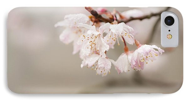 Prunus Hirtipes Phone Case by Anne Gilbert