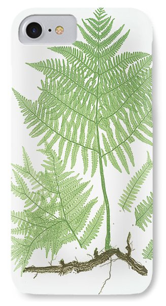 Pteris Aquilina. The Common Brakes, Or Bracken IPhone Case by Litz Collection