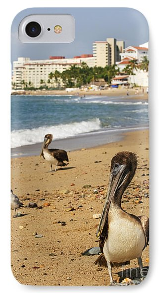 Puerto Vallarta Pelicans IPhone Case by Elena Elisseeva