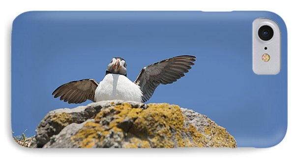 Puffed Up Puffin Phone Case by Anne Gilbert