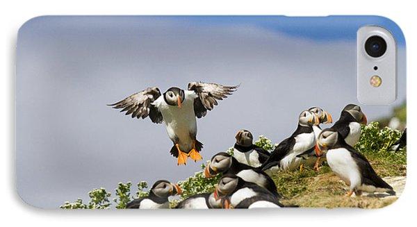 Puffin Colony On Bird Island Hornoya IPhone Case by Heiko Koehrer-Wagner