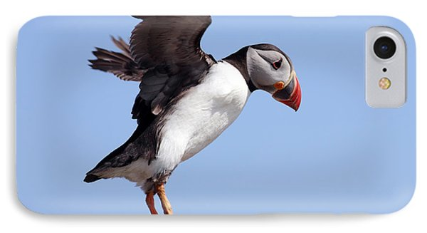 Puffin In Flight IPhone Case by Grant Glendinning