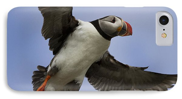 Puffin Ready For Landing IPhone Case by Heiko Koehrer-Wagner