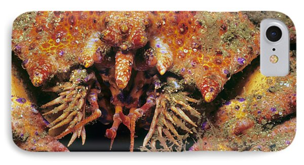 Puget Sound King Crab IPhone Case by Jeff Rotman