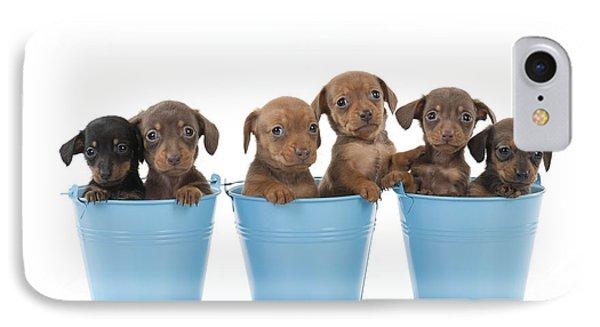 Puppies In Buckets IPhone Case by John Daniels