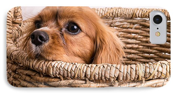 Puppy In A Laundry Basket Phone Case by Edward Fielding