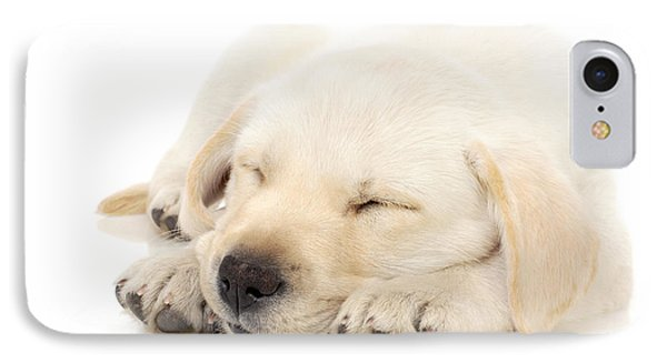 Puppy Sleeping On Paws Phone Case by Johan Swanepoel