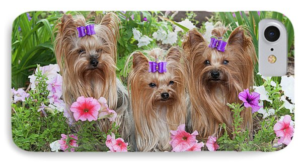 Purebred Yorkshire Terrier In Flowers IPhone Case by Piperanne Worcester
